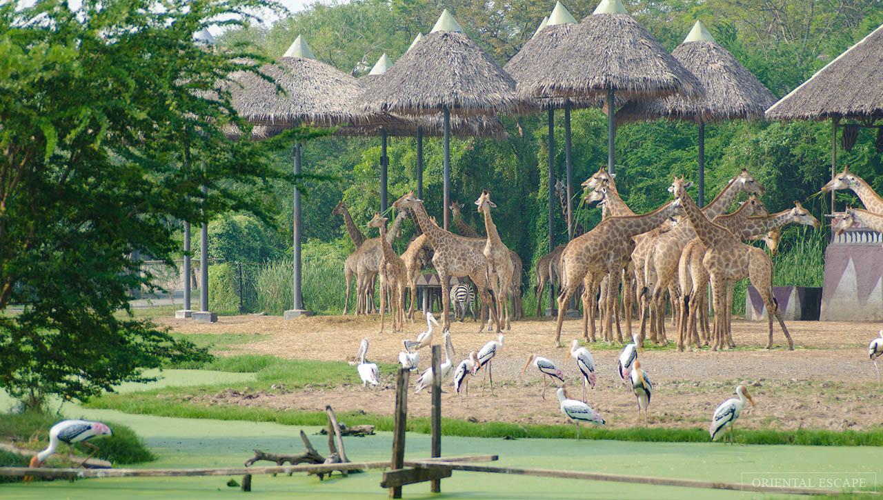 Kết quả hình ảnh cho safari world thailand